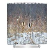 Wild Winter Shower Curtain