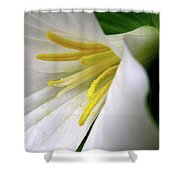 Wild Woodland Beauty Shower Curtain