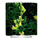 Wild Yellow Flowers On Black Background Shower Curtain