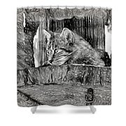 Wildcat - Impressions Shower Curtain