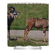 Wildebeest I Shower Curtain