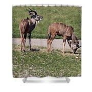 Wildebeest II Shower Curtain