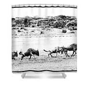 Wildebeest On The Move Shower Curtain