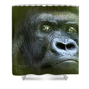 Wildeyes-silverback Shower Curtain