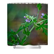 Wildflower 1 Shower Curtain