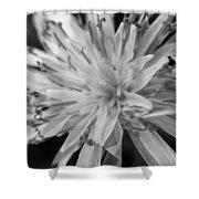 Wildflower 5 Black N White Shower Curtain