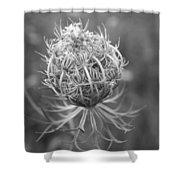 Wildflower I Shower Curtain