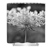 Wildflower II Shower Curtain