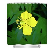 Small Sundrops Flower Shower Curtain