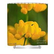 Wildflower Named Birdsfoot Trefoil Shower Curtain