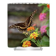 Wildflower Swallowtail Shower Curtain