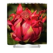 Wildflower Waratah Shower Curtain