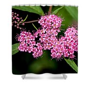 Wildflowers Come In Many Sizes Shower Curtain