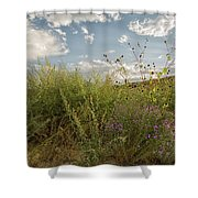 Wildflowers Of Chaco Shower Curtain