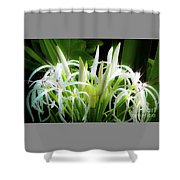 Wildflowers Of Hawaii Shower Curtain