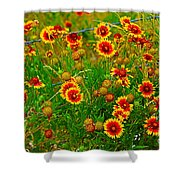 Wildflowers On The Barb Shower Curtain