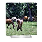 Wildhorses Of Cumberland Shower Curtain