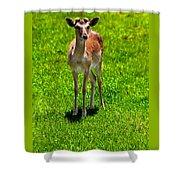 Wildlife 2 Shower Curtain