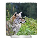 Wiley Shower Curtain