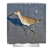 Willet And Shadow Shower Curtain