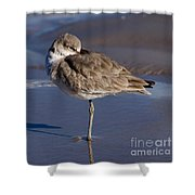 Willet Resting At The Beach Shower Curtain