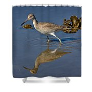 Willet Searching For Food In An Oyster Bed Shower Curtain