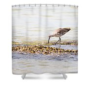 Willet Set 4 Of 4 By Darrell Hutto Shower Curtain