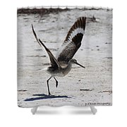 Willet Take-off Shower Curtain