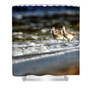 Willets In The Waves Shower Curtain