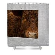 Williamsburg Calf Shower Curtain