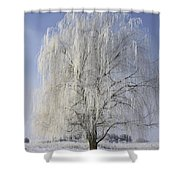 Willow In Ice Shower Curtain