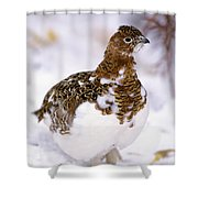Willow Ptarmigan Shower Curtain