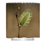 Willow Spring Shower Curtain