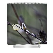 Willow Stages Shower Curtain