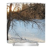 Willow Tree At Sunrise Shower Curtain
