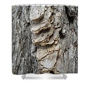 Willow Tree Bark Up Close Shower Curtain