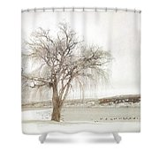 Willow Tree In Winter Shower Curtain