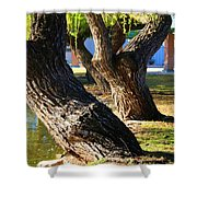 Willow Trees Shower Curtain