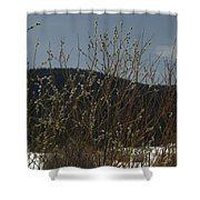 Willows In Snow Shower Curtain