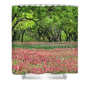 Willows,indian Paintbrush Make For A Colorful Palette. Shower Curtain
