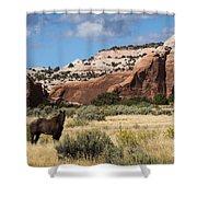 Wilson Arch Shower Curtain