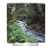 Wilson Creek #14 With Added Cedar Waxwing Shower Curtain