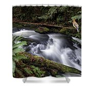 Wilson Creek #18 With Added Cedar Waxwing Shower Curtain
