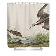 Wilson's Phalarope Shower Curtain