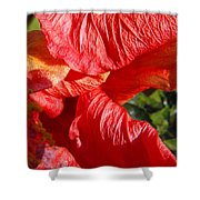 Wilting Hibiscus Two Shower Curtain