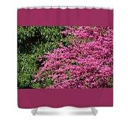 Fuji Velvia 50 Shower Curtain