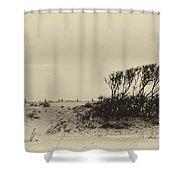 Wind Grown Beach Trees Shower Curtain