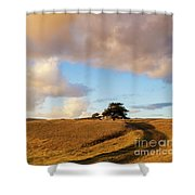 Winding Road Leads To A Lone Tree Shower Curtain