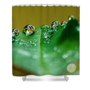 Windows In Drops Shower Curtain