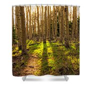 Windsor Trail At Dusk - Santa Fe National Forest New Mexico Shower Curtain